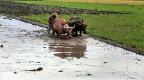 Landbouwer die een gebied ploegen die traditionele hulpmiddelen met behulp van Royalty-vrije Stock Afbeeldingen