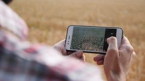 Landbouwer die foto's van oogst van tarwe nemen stock videobeelden