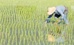 Landbouwer die in fram werkt Royalty-vrije Stock Fotografie