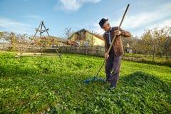 Landbouwer die gras verzamelen om de dieren te voeden Stock Foto