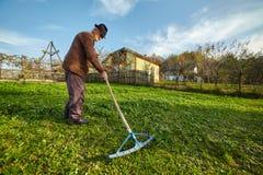 Landbouwer die gras verzamelen om de dieren te voeden Royalty-vrije Stock Foto's