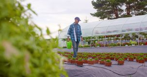 Landbouwer die installaties op landbouwbedrijf onderzoeken stock footage