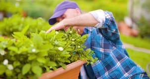 Landbouwer die installaties op landbouwbedrijf onderzoeken stock video