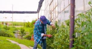 Landbouwer die installaties op landbouwbedrijf onderzoeken stock videobeelden