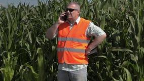 Landbouwer die met smartphone door het graangebied lopen stock video