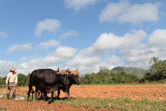 Landbouwer die op de gebieden werken royalty-vrije stock afbeeldingen