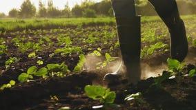 Landbouwer die op het gebied in rubberlaarzen lopen Close-up stock video