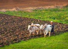Landbouwer die op het gebied werken Royalty-vrije Stock Foto