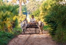 Landbouwer die op het gebied werken Stock Foto