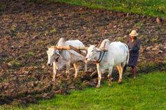 Landbouwer die op het gebied werken Royalty-vrije Stock Afbeeldingen