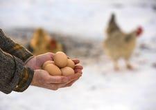 Landbouwer die organische eieren houden Stock Afbeeldingen