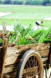 Landbouwer die in paddyfield werkt Stock Foto's
