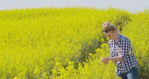 Landbouwer die raapzaad bloeiende installaties onderzoeken stock video