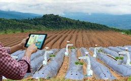 Landbouwer die van het de robotwerk van het tablet slimme wapen van de de aardbeizorg landbouwmachines houden stock foto