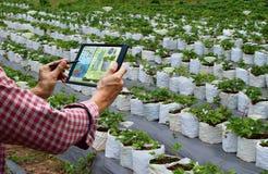 Landbouwer die van het de robotwerk van het tablet slimme wapen landbouwmachines houden stock foto's