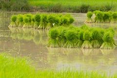 Landbouwer die zaailingen terugtrekken Royalty-vrije Stock Afbeeldingen