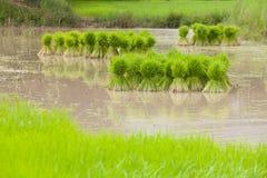 Landbouwer die zaailingen terugtrekken Royalty-vrije Stock Foto's