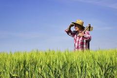 Landbouwer die zich op tarwegebied bevinden en overdwars kijken Royalty-vrije Stock Afbeeldingen