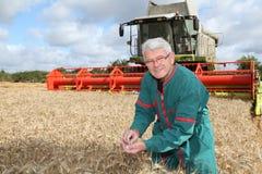 Landbouwer die zich op tarwegebied bevindt Royalty-vrije Stock Foto's
