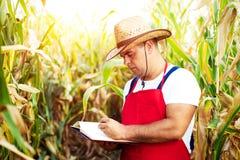 Landbouwer die zijn cornfield controleren stock afbeelding