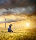 Landbouwer die zijn gewas van tarwe controleert Stock Foto