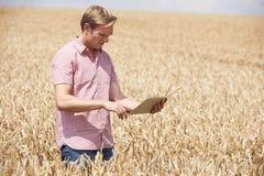 Landbouwer With Digital Tablet die Tarwegewas op Gebied onderzoeken royalty-vrije stock afbeelding