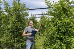 Landbouwer in een Boomgaard die Voorwaarde van Apple-Bomen controleren royalty-vrije stock afbeelding