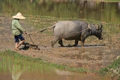 Landbouwer en buffels - Noord-Vietnam Royalty-vrije Stock Foto