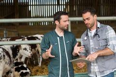 Landbouwer en het veterinaire samenwerken in een schuur stock fotografie