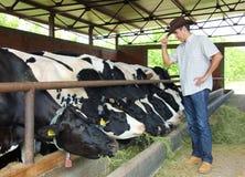 Landbouwer en Koeien Royalty-vrije Stock Foto's