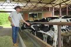 Landbouwer en koeien Stock Foto