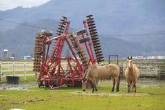 Landbouwer en Paarden Royalty-vrije Stock Afbeelding