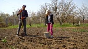 Landbouwer en zijn kleine dochter die op gebied werken die aardappels in de lente planten stock videobeelden