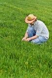 Landbouwer Examines en de Cultuurgebied van de Controles Jong Tarwe Stock Foto
