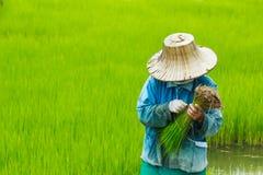 Landbouwer, gebied Stock Foto