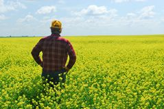 Landbouwer in Gewas Canola Stock Fotografie
