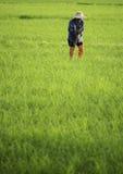 Landbouwer in het gecultiveerde land Royalty-vrije Stock Foto