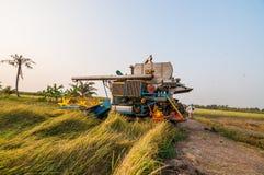 Landbouwer het oogsten rijst met oogstauto Stock Foto's
