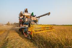 Landbouwer het oogsten rijst met oogstauto Stock Afbeeldingen