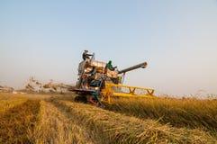 Landbouwer het oogsten rijst op padiegebied met oogstauto Royalty-vrije Stock Afbeelding