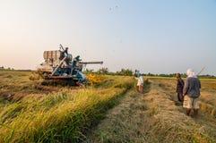 Landbouwer het oogsten rijst op padiegebied met oogstauto Royalty-vrije Stock Foto's