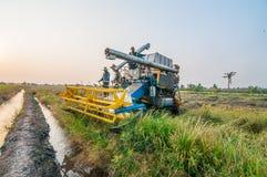 Landbouwer het oogsten rijst op padiegebied met oogstauto Royalty-vrije Stock Fotografie