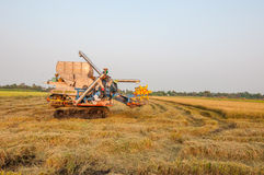 Landbouwer het oogsten rijst op padiegebied met oogstauto Stock Foto's