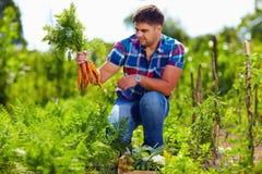 Landbouwer het oogsten wortelen in moestuin Stock Foto