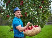 Landbouwer het plukken appelen in een mand royalty-vrije stock afbeelding
