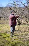Landbouwer het snoeien appelboom stock afbeeldingen