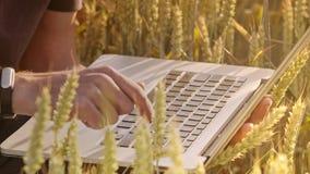 Landbouwer het typen op computertoetsenbord op tarwegebied stock footage