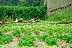 Landbouwer het werken Royalty-vrije Stock Fotografie