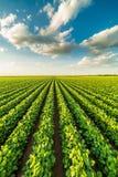 Landbouwer het zaaien, het zaaien gewassen bij gebied stock fotografie