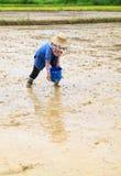 Landbouwer het zaaien rijstzaad Stock Afbeelding